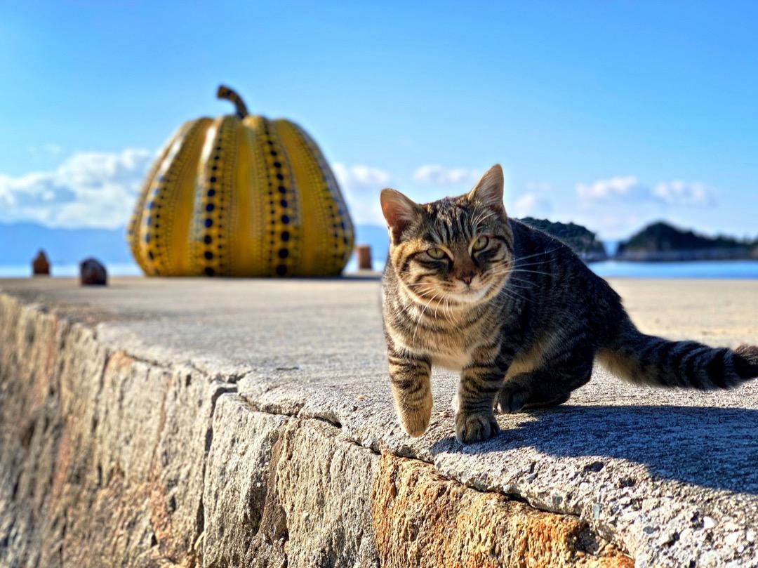 手機攝影師 erica Wu 《世界貓旅》